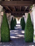 Boxwood obelisks