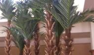 Atria Palm Desert