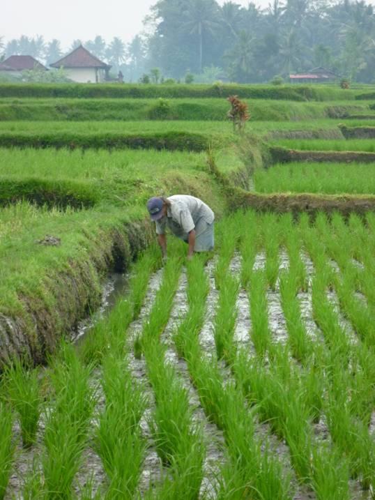 Silk Grass Plantings