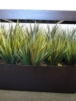 Silk Grass Plantings