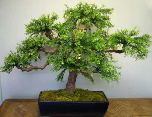 silk bonsai trees topiaies make be leaves. Black Bedroom Furniture Sets. Home Design Ideas
