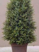 Natural Boxwood Topiary