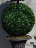 Ball Boxwood Topiary