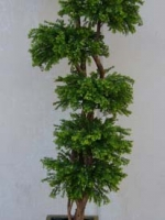 Bonsai Tall - Tea Leaf