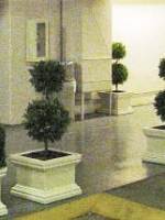 Boxwood Topiary and Boxwood Hedge planter