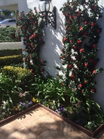 makebeleaves-red-azalea-trellis-planting