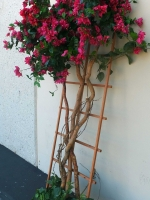 makebeleaves.bougainvillea-trellis