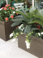 Palmdale Regional Hospital - UV Cycas Palm and flowering bougainvilleas and geraniums