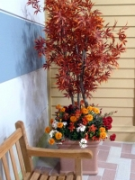 red_faux-japanese-maple-tree-marigold-base