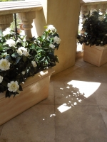 Bel-Air estate - UV white gardenias potted in decorative rectangle planters