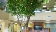 18ft Trees