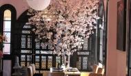 cherry-blossom-tree_600