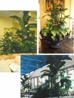 Custom Plantings Collage 8