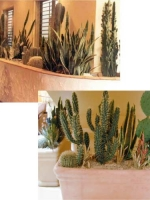 Custom Plantings Collage 9