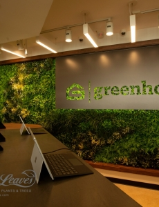 benchdog faux green wall GREENHOUSE