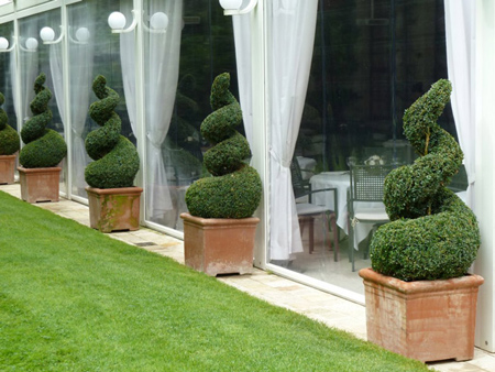 Spiral Topiaries