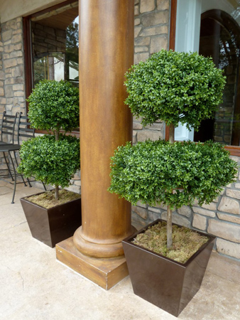 Cone Shaped & Double Ball Topiaries