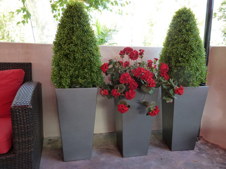 Spiral & Bullet shaped Topiaries