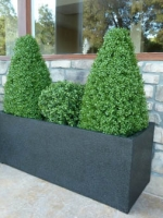 Mixed Topiary Hedge