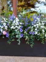 Hydrangeas & Wild flowers
