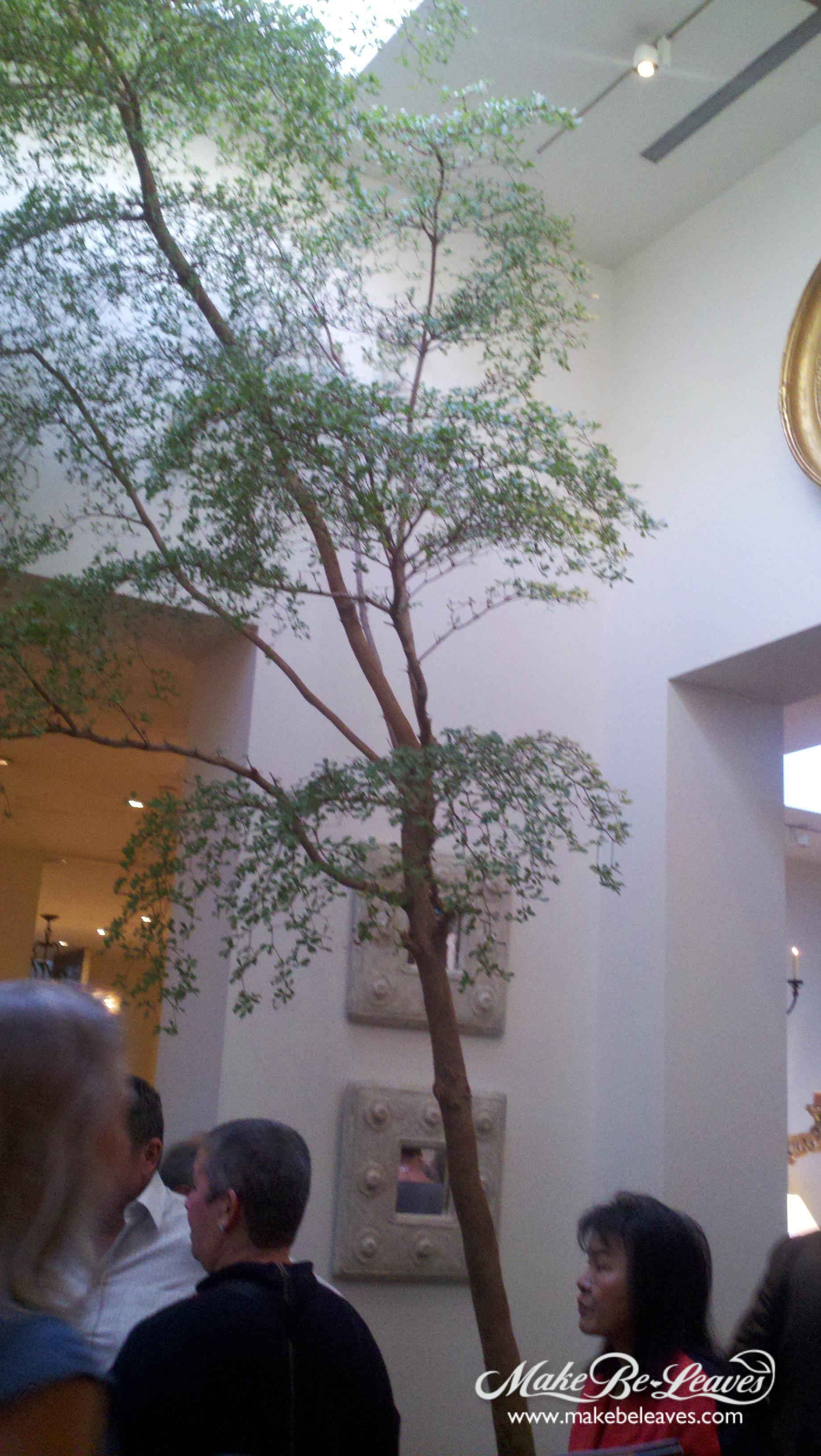 inspiration-photo-for-Nandina-Tree