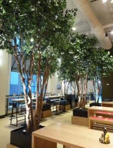 Silk Ficus Trees