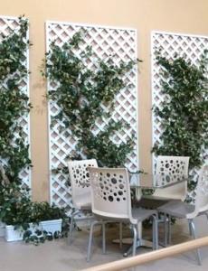 Trellis Plantings