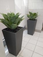 VA Hospital North Las Vegas - succulents