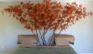 red_japanese_maple_600