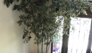 Silk olive tree14ft
