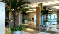 Preserved Palms