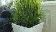 Grasses Reeds