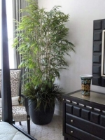 Bamboo_Tree_with_grass_600