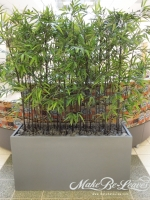 Black_Bamboo_in_Earth_Wall_planter