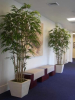 bamboos_hall_lg-1