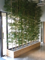 •<strong>Bamboo privacy plantings</strong>: our stylish, contemporary bamboo plantings will provide privacy while allowing light through – a great balance for your special event.