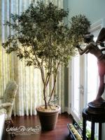 8ft Mediterranean Olive