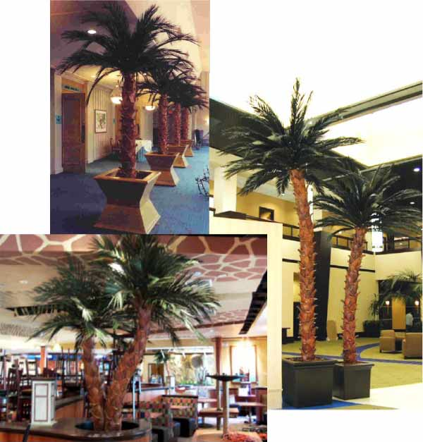 Preserved Palms Collage #1