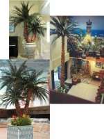 Preserved Palms Collage #2