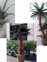 Preserved Palms Collage #4