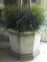 Preserved Bear Grasses
