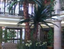 Phoenix Preserved Palm