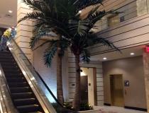 Casino large palm trees