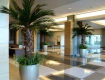 preserved_palms_2