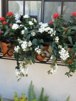 mixed-uv-flowering-plants1