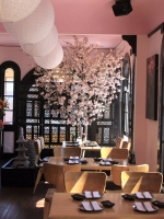 Geisha Restaurant SF Cherry Blossom trees