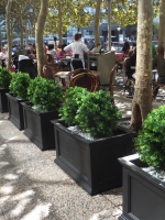 Faux Boxwood - PJ Clarkes on Hudson NYC