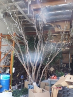 lg-canopy-tree-potting