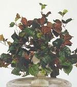 Ivy - Maple Leaf