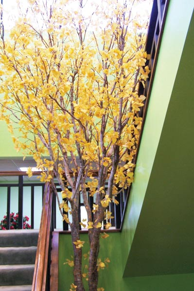 Artificial Trees In Decorative Containers Custom Made To